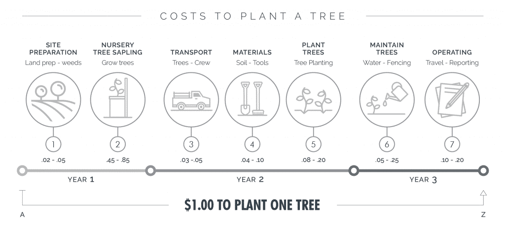 One Tree Planted Costs and Process